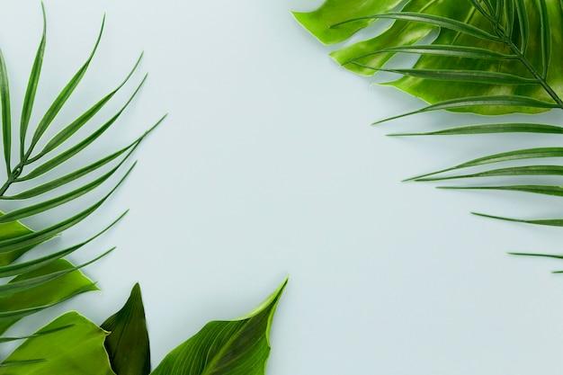 Mise à plat de l'assortiment de feuilles différentes