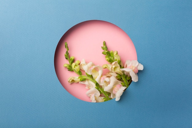 Mise à plat belle composition de fleurs