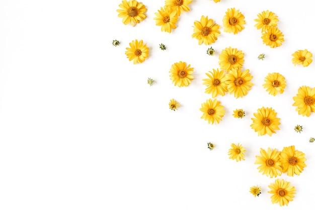 Mise à plat des boutons de fleurs et des feuilles de marguerite jaune sur une surface blanche