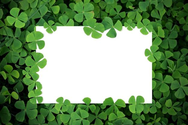 Mise à plat créative de feuille de papier blanc, carte ou note sur feuille verte nature minimale. fond de cadre