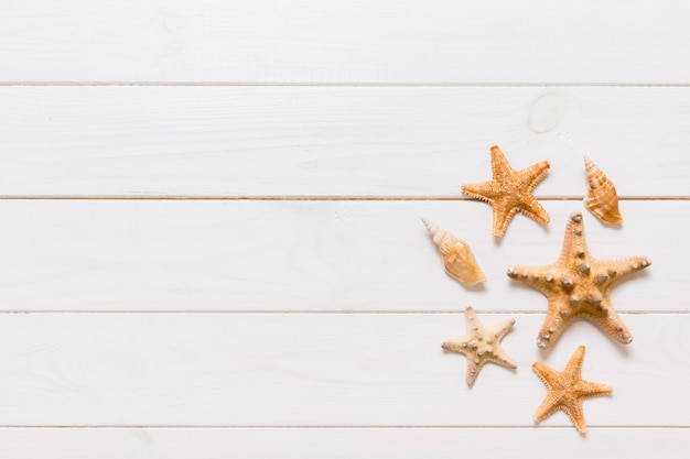 Mise à plat de divers coquillages et étoiles de mer sur une table en bois blanc, vue de dessus.