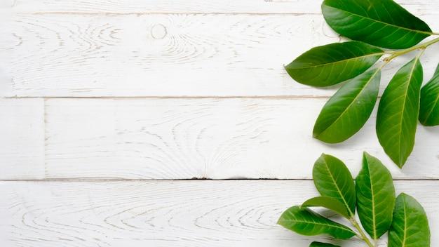 Mise à plat du concept de feuilles avec espace copie