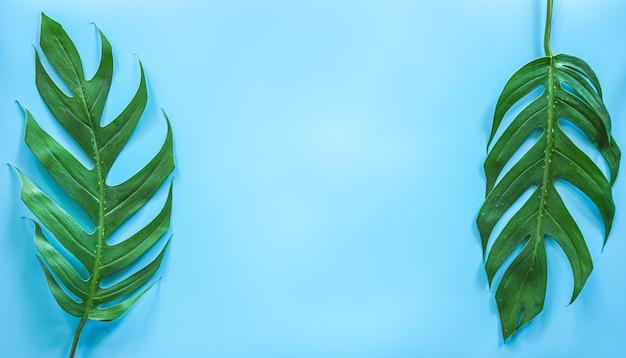 Mise à plat de feuille de monstera tropical vert avec espace copie