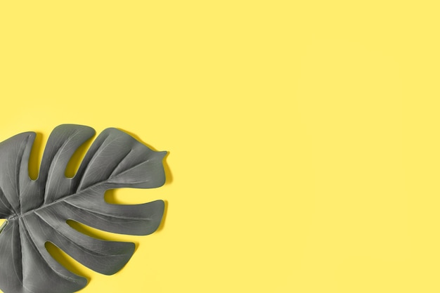 Mise à plat avec feuille tropicale grise monstera sur jaune tendance