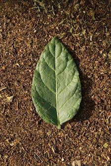 Mise à plat de feuille verte de tabac sur feuille de tabac coupé à sec comme arrière-plan avec espace de copie dans un style minimal, modèle pour le lettrage, le texte ou votre conception