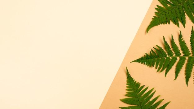 Mise à plat de feuilles de fougère avec espace copie