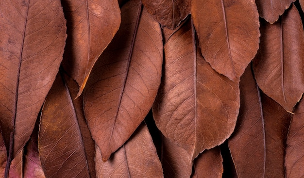 Mise à plat de feuilles séchées