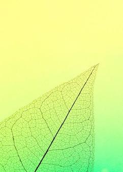 Mise à plat de feuilles translucides de teinte colorée