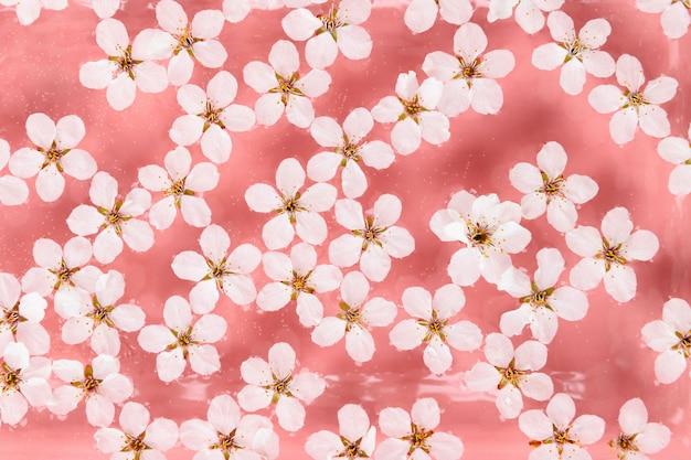 Mise à plat de fleurs blanches cerises sauvages flottantes à la surface de l'eau, fond rose pastel