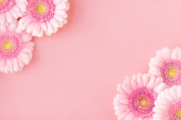 Mise à plat de gerberas fleurs roses, espace copie