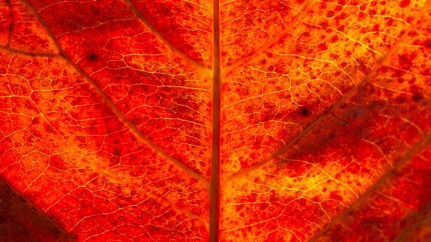 Mise à plat gros plan de feuille d'automne