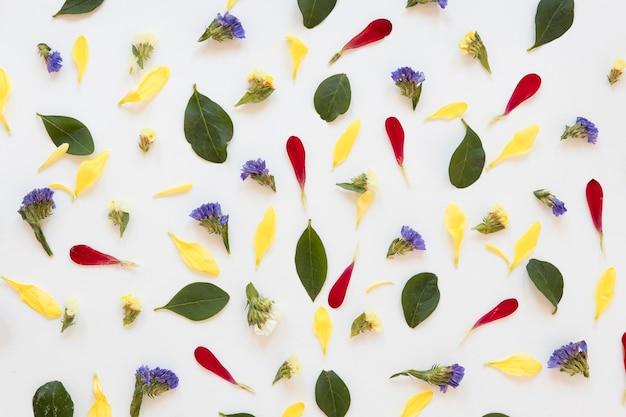 Mise à plat d'un magnifique arrangement de fleurs