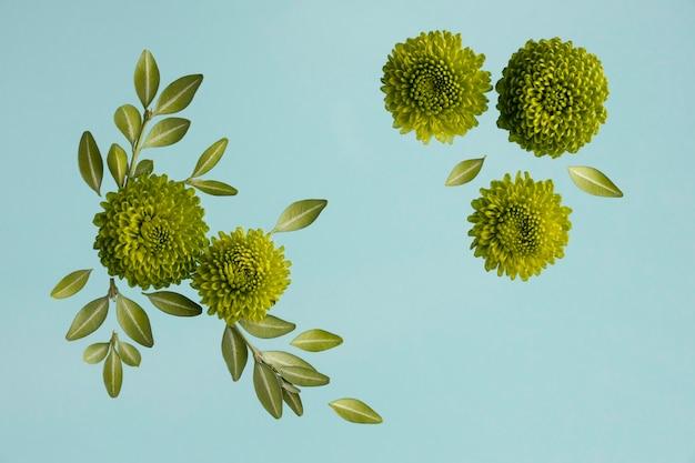 Mise à plat de marguerites printanières avec des feuilles