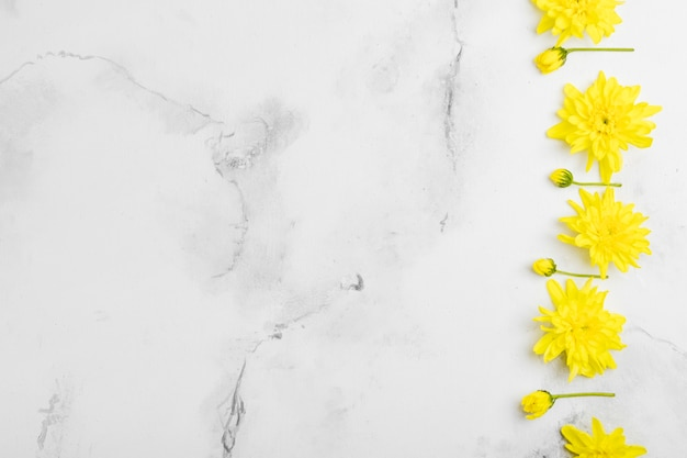 Mise à plat de marguerites de printemps avec fond de marbre