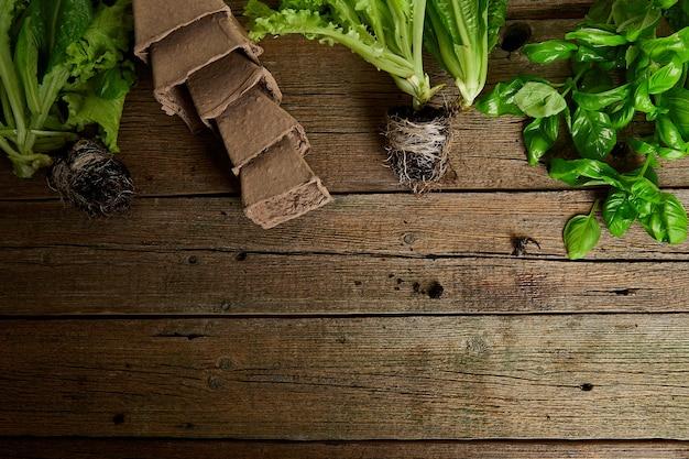 Mise à plat d'outils de jardinage, basilic, pot de fleurs éco verts, sol