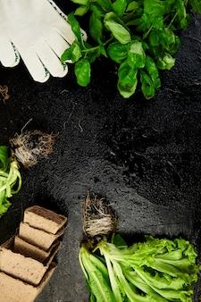 Mise à plat d'outils de jardinage, basilic, pot de fleurs écologique, sol sur fond noir.
