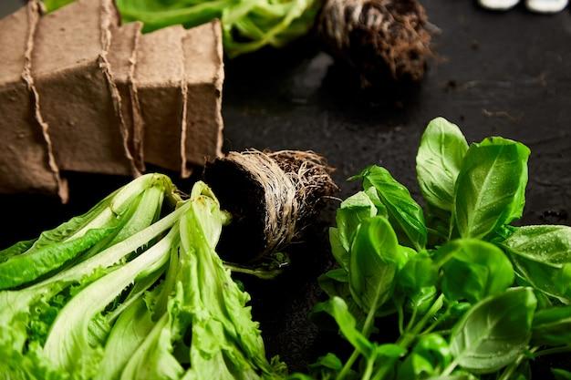 Mise à plat d'outils de jardinage, basilic, pot de fleurs écologique, sol