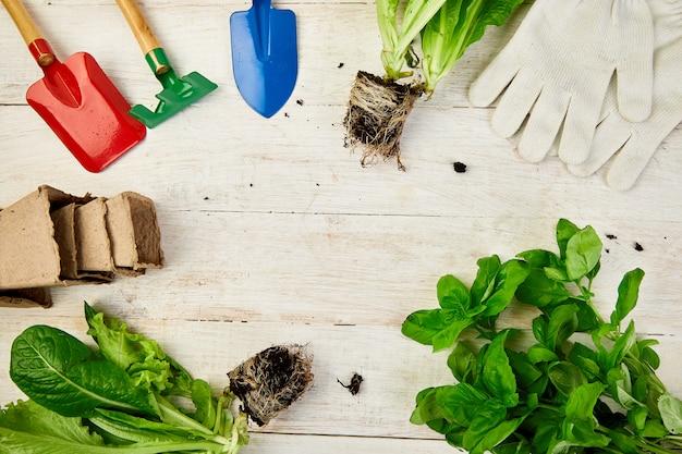 Mise à plat d'outils de jardinage, basilic, pot de fleurs écologique, terre sur une table en bois blanc.