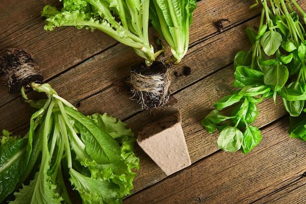 Mise à plat d'outils de jardinage, basilic, pot de fleurs écologique vert, sol sur fond en bois.