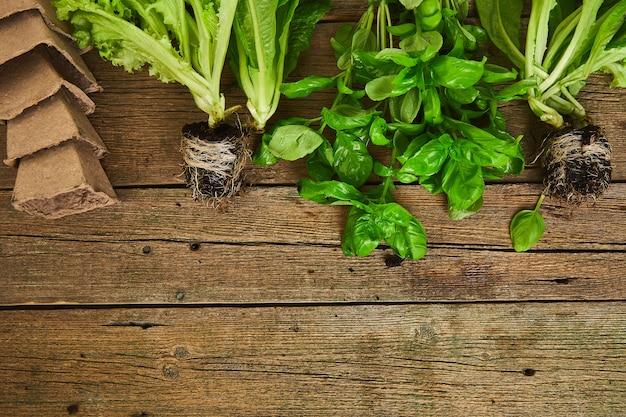 Mise à plat d'outils de jardinage, basilic, pot de fleurs écologique vert, sol sur table en bois.