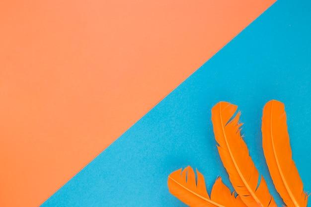 Mise à plat de plumes de carnaval avec espace copie