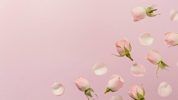 Mise à plat de roses de printemps rose avec espace copie