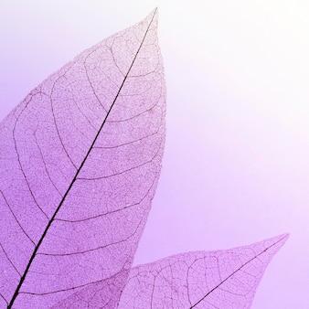 Mise à plat de la texture des feuilles colorées