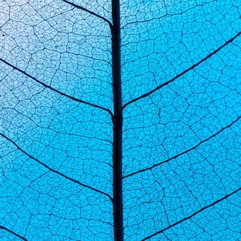 Mise à plat de la texture des feuilles translucides colorées