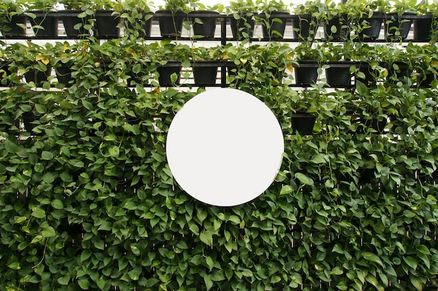 Mock up blank white of signboard sur l'espace mural des plantes pour le texte. montage d'affichage de produit