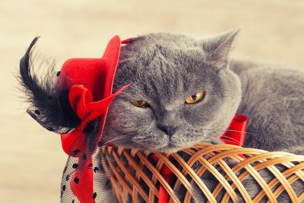 Mode portrait de chat mignon portant un chapeau féminin