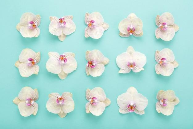Modèle abstrait de fleurs d'orchidées sur fond bleu.