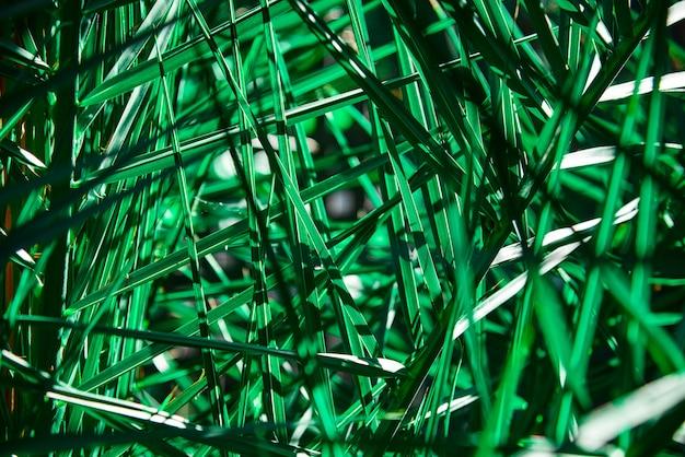 Modèle abstrait tropical de feuilles de palmier vert