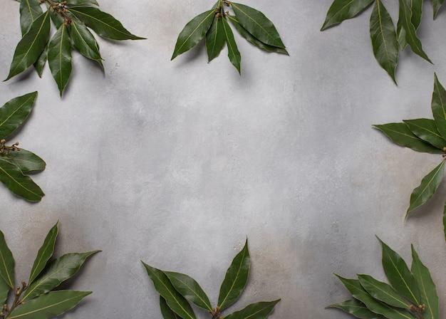 Modèle de cadre de feuilles vertes pour le texte surface grise horizontale