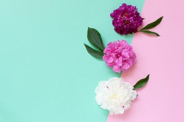 Modèle de carte de voeux avec des fleurs de pivoine sur la vue de dessus de fond deux tons.