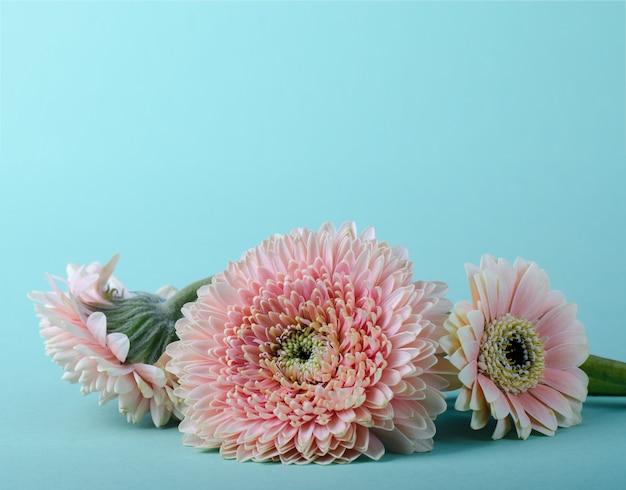 Modèle de carte de voeux avec trois gerberas roses douces sur un fond de couleur turquoise.