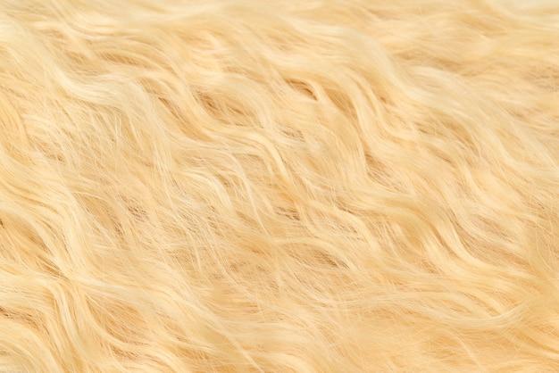Modèle de cheveux ondulés blonds. vue de dessus.