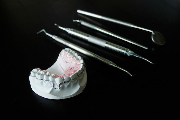 Modèle dentaire de dents humaines (dents blanches) et instrumentiste dentiste