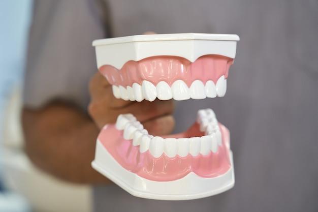 Modèle dentaire des dents humaines étant montré par le docteur