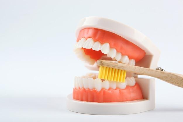 Modèle dentaire de dents et produits de soins dentaires sur fond coloré