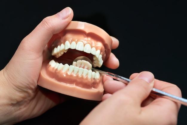 Modèle dentaire, observation à l'aide d'un miroir dentaire