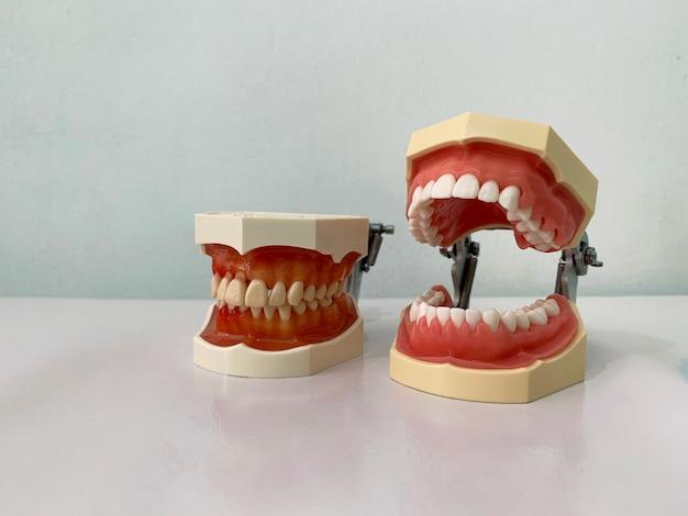 Modèle de dents et de mâchoire sur une table blanche dans la clinique du dentiste.