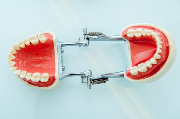 Modèle de dents de mâchoire