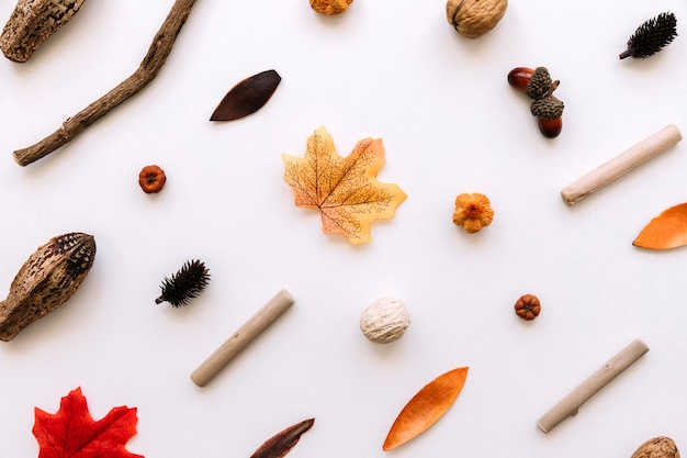 Modèle avec des éléments d'automne