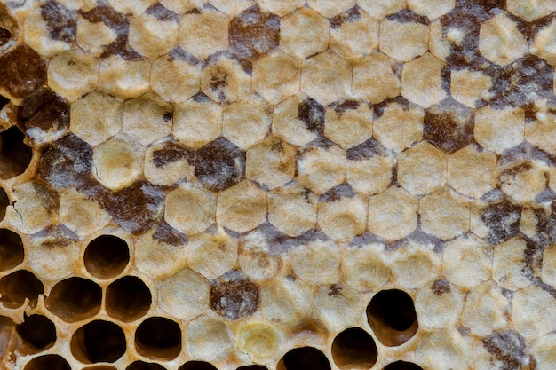 Modèle de gros plan honyecomb