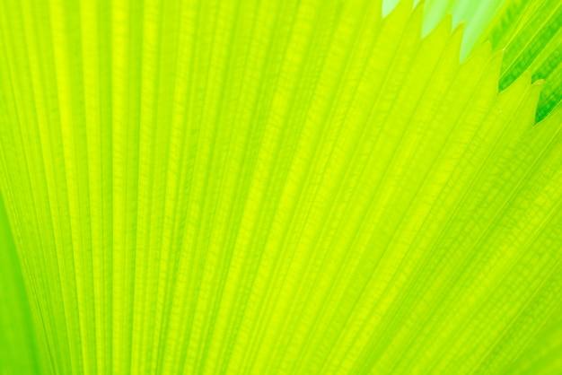 Modèle de lignes droites de feuilles vertes fraîches