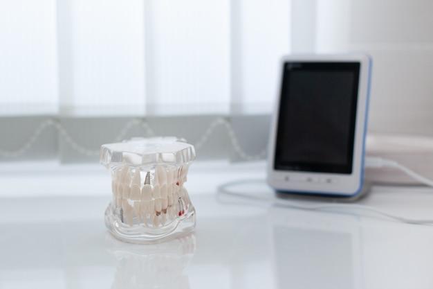 Modèle de mâchoire artificielle sur la table dans le cabinet dentaire