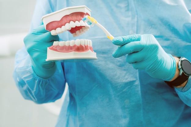 Un modèle d'une mâchoire humaine avec des dents et une brosse à dents dans la main du dentiste