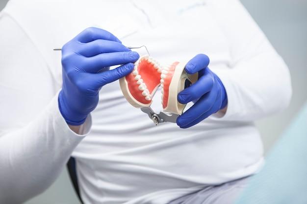 Modèle de mâchoire de prothèses dans les mains d'un dentiste méconnaissable