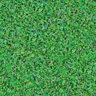 Modèle de mélange d'herbe verte transparente pour le fond