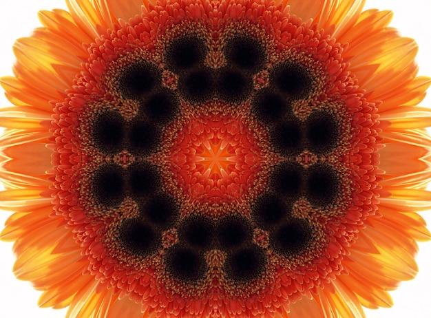 Modèle de nature abstraite avec fleur de gerber
